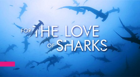 MIPTV - FOR THE LOVE OF SHARKS - Factual & Documentary Showcase